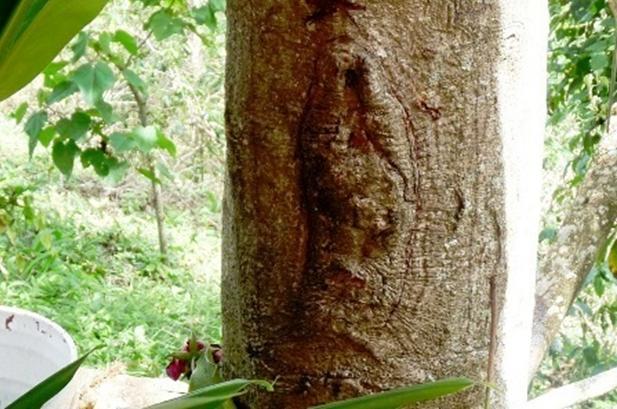 guadalupe-notre-dame-apparition-arbre-23-juillet-2012